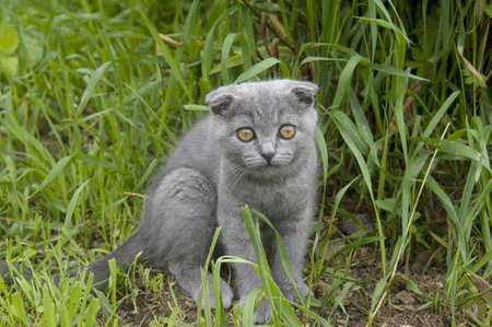 small gray cat playing in the garden photo