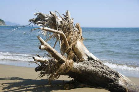water s edge: intoppo sulla spiaggia del Mar del Giappone