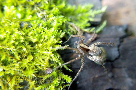 Spider on green moss bright light of the sun in the forest, macro, macrophoto , blurred background