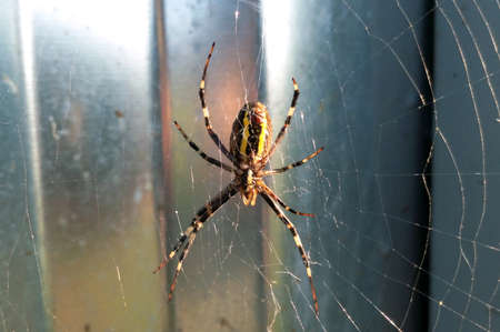 Spider on natural spider web in sunny bright summer day close-up Фото со стока - 95456208