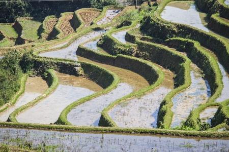 yuanyang: Rice field terrace in Yuanyang