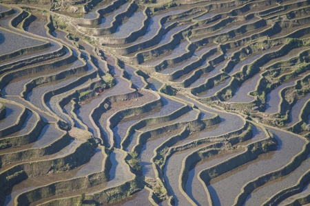 yuanyang: Rice field terrace in Yuanyang of China  Stock Photo
