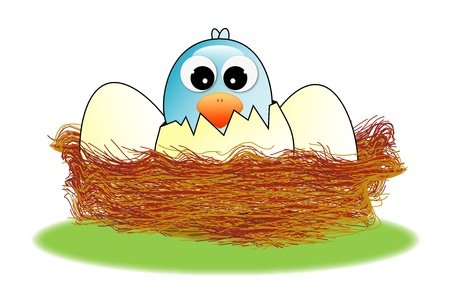hatched: Hatched egg in the nest