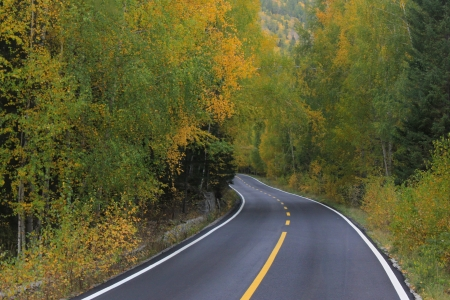 Asphalt road in colorful forest photo