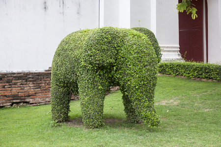 Tree cut in elephant shape photo