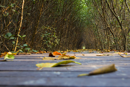 Leaves on pathway bridge in mangrove forest photo
