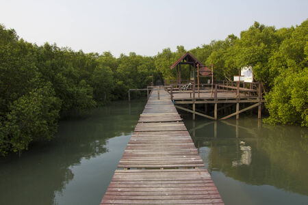 Boardwalk in the mangrove forest photo