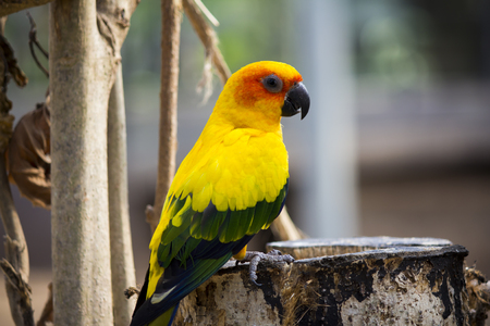 roost: Colorful little parrot on the roost Stock Photo