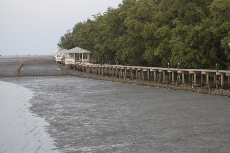elevated: Wooden pavillion and elevated walkway beside the mangrove forest
