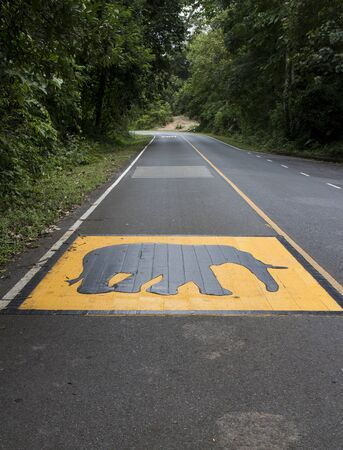 thai elephant: Elephant warning sign painted on the road surface in National Park of Thailand Stock Photo