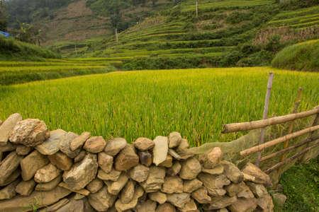 sapa: Rice field in Sapa, Vietnam
