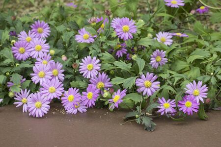 Purple flower and green leaves on the brown background