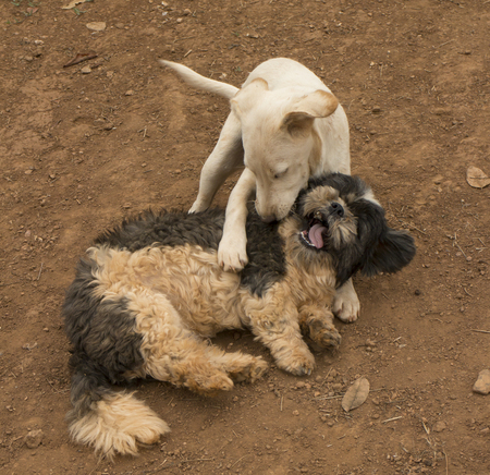 Two dogs playing with each other on the ground