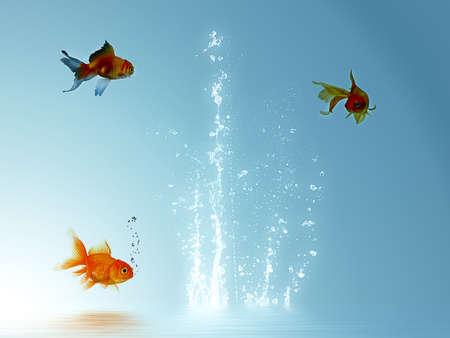 goldfish Stock Photo