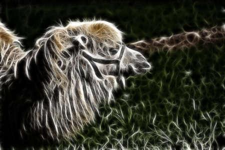 fractal filtered