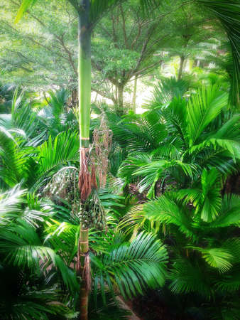 Palm tree Forest  Stock Photo