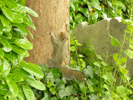 a squirrel clambering up a tree photo