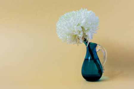 White chrysanthemum in a blue vase on a beige background.