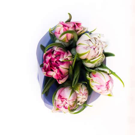Beautiful tseti tulips on a light background Imagens
