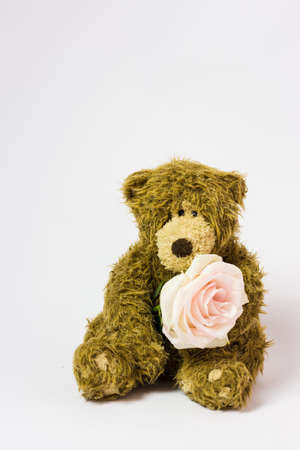 toy cute teddy bear with a living flower in its paws. High quality photo
