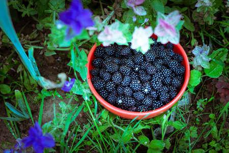 Blackberries in a bowl among flowers