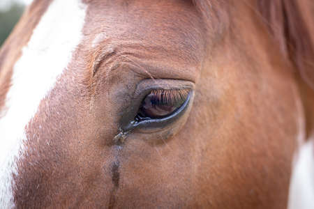 Horse eye macro shot
