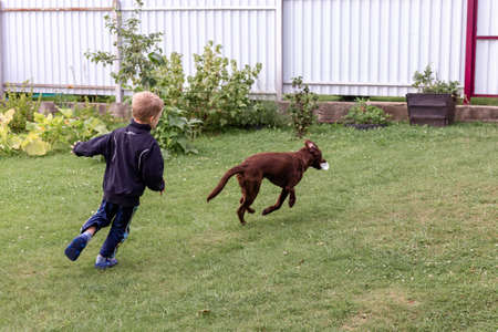 Boy catches up with brown dog