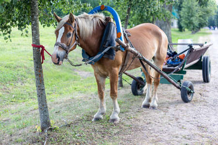 Brown horse harnessed to a cart Фото со стока