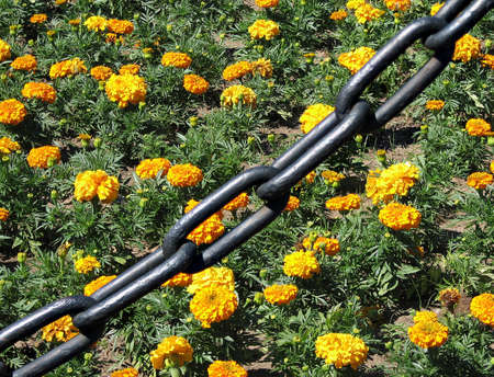 object oppression: The chain blocking the acsess to the flower-bed   Stock Photo