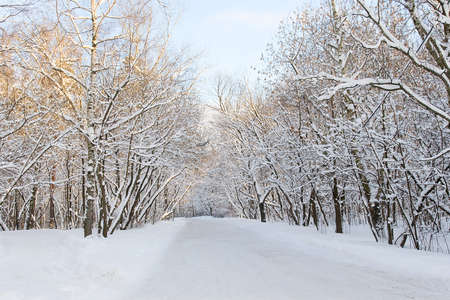 A path between trees covered with snow photo