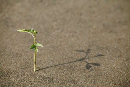 strong growth: Plant growing in the sand adapted to the hot climate Stock Photo