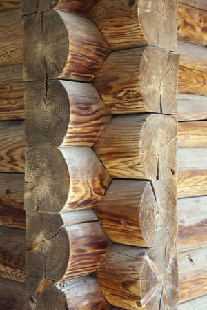 dovetail: Corner of a new loghouse, dovetail joint
