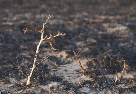 Dead plants with burnt ground in the back photo
