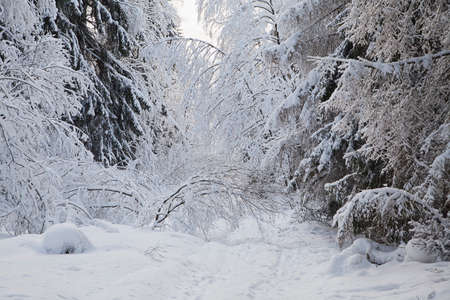 Image result for blizzard on mountain path
