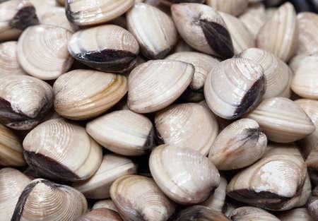 Fresh clams in a market in Vietnam Фото со стока - 107596721