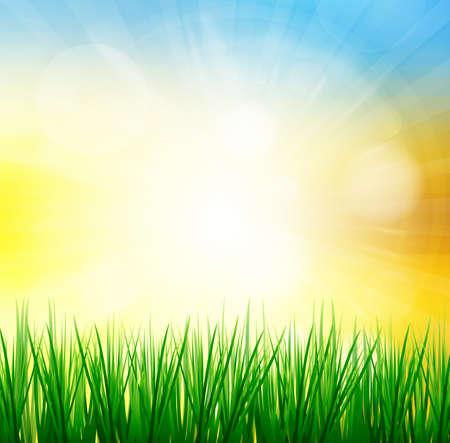 Fresh spring green grass with sunlight blured background,Nature illustration