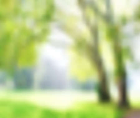 Blur green park with bokeh, abstract background, template,eco concept