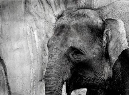 Elephant Banco de Imagens