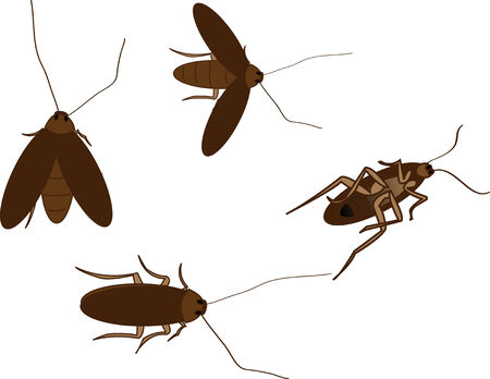 cockroach: Cockroach Vector