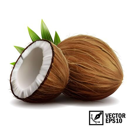 3D realistic isolated vector set of whole coconut, coconut halves and palm leaves Ilustracja