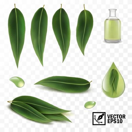 3D Realistic vector set of elements, eucalyptus leaves and dew drops or oil Illustration