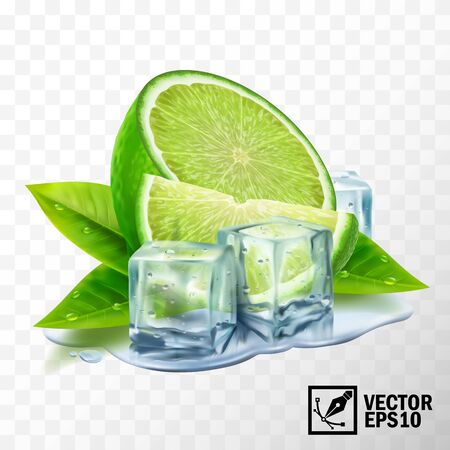 realistic vector set of elements lime with mint or tea leaves and ice cubes, half lime, sliced lime, leaves, puddle water