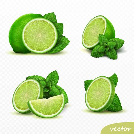 realistic vector set of elements lime with mint, whole lime, sliced lime, drop lime oil, leaves