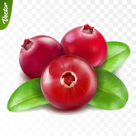 3d realistic isolated vector three cranberry with leaf, editable handmade