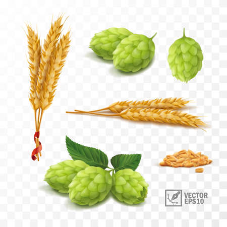 3d realistic set for beer, ears and grains of wheat, hop cones Vecteurs