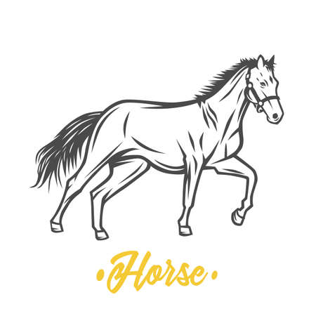 Horse. Black and white vector objects. Black and white illustration. Çizim