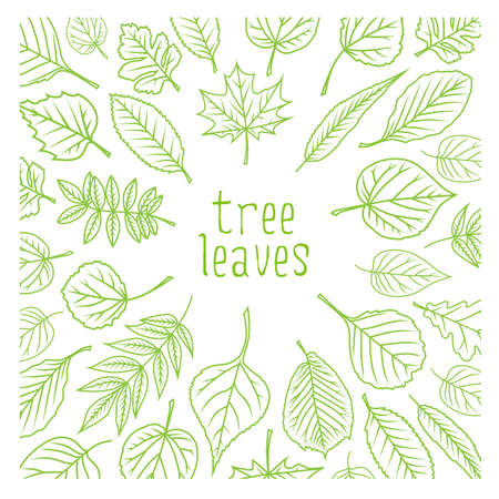 Tree leaves. Colorful illustrations. Vector illustration. Vectores