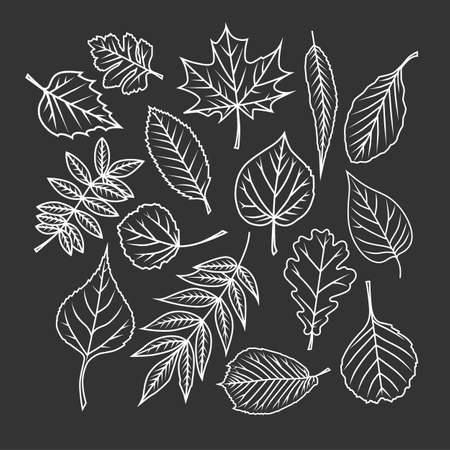 Tree leaves. Black and white vector objects. Illustration