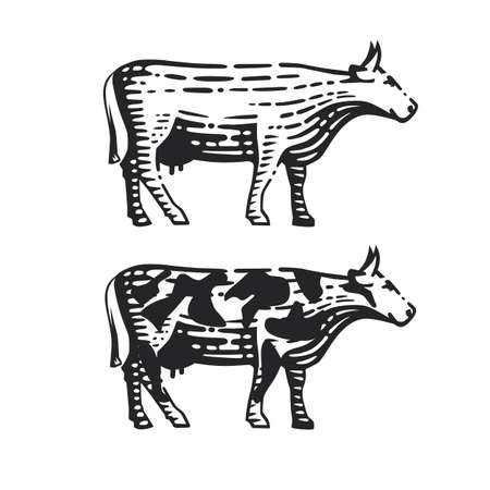 Illustration of the cow. Vector illustration. Black and white vector objects.  イラスト・ベクター素材