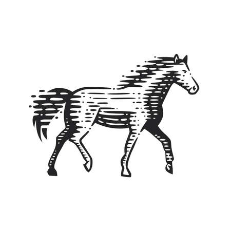 Illustration of the running horse. Vector illustration. Black and white vector objects.